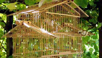 gouden vogelkooi