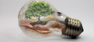 hand met boom in gloeilamp